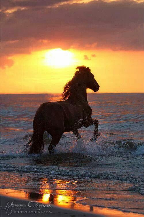 Friesian cutting through waves to the edge of the earth.