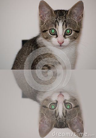 Little cat with green eyes. Mirror effect.