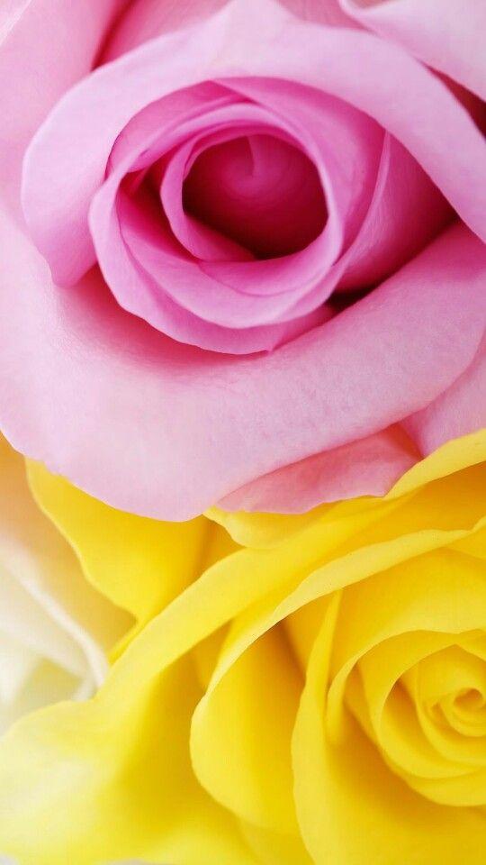 Come Fare I Nodi Whatsapp Dp Images Wallpaper Flowers