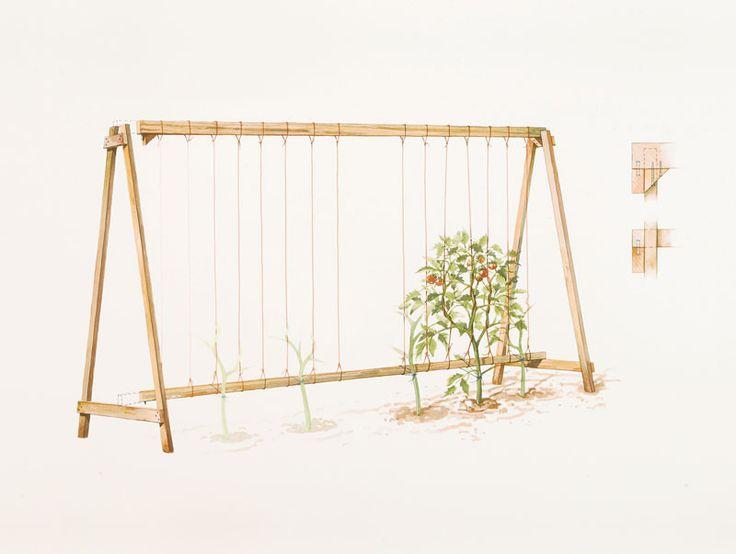 Build an A-Frame Tomato Trellis. This easy project explained here http://www.vegetablegardener.com/item/3367/build-an-a-frame-tomato-trellis