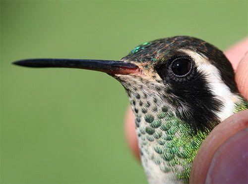 Best Hummingbirds Images On Pinterest Butterflies - Photographer captures amazing close up photos of hummingbirds iridescent feathers