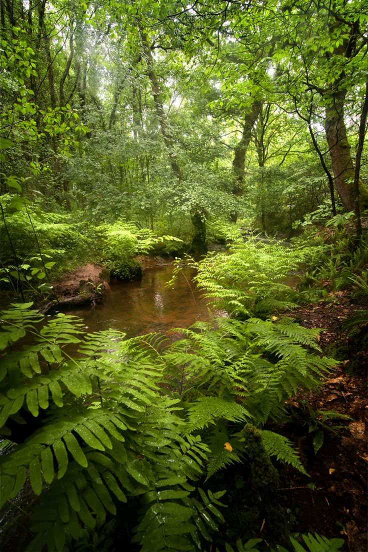 Brocéliande (France), but it reminds me very much of scenery along the Old Cascade Highway in Washington state.