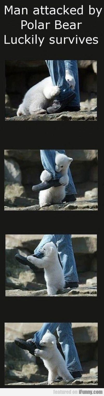 Polar bear attack.