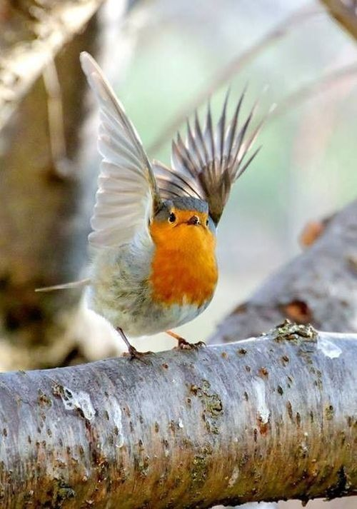 My favourite - Robin <3