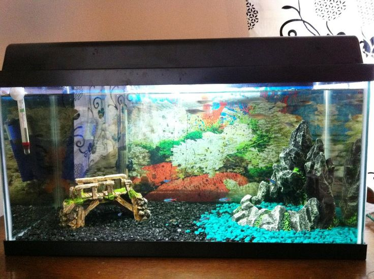 67 best images about fish tanks on pinterest aquarium for Aquarium decoration ideas