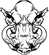 wild boar skulls drawings | Mascot Clipart Image of A Wild Boars Head With Tusks