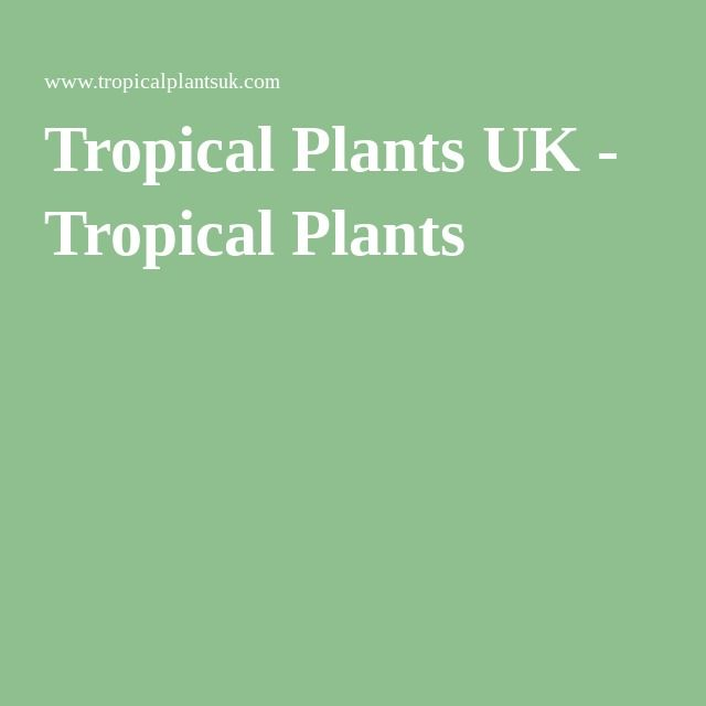 Tropical Plants UK - Tropical Plants