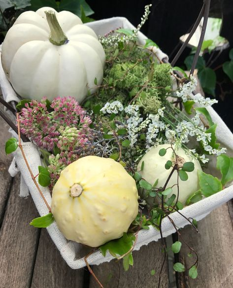 Weisser Kürbis Deko White Pumpkins Pumpkin Und Front Porch Planters