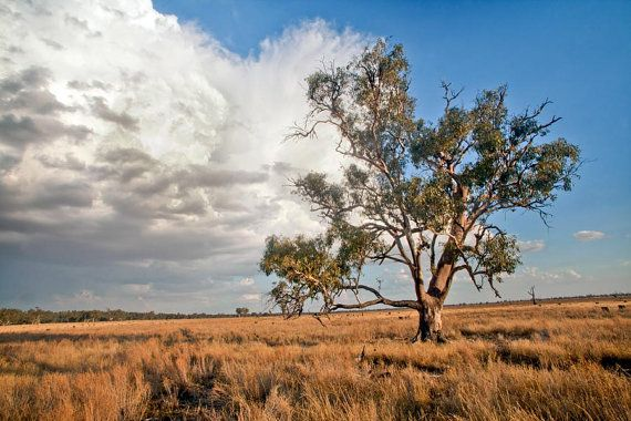 Storm Fine Art Photography Australian Bush Landscape