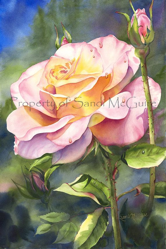 Original+Watercolor+Print+Peace+Rose+by+Sandi+by+SandiMcGuire