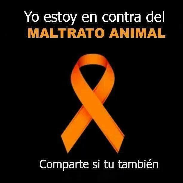 Fomento a una cultura de legalidad sobre los derechos de los animales.