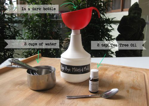 How to make an all natural dust mites & mold killer with tea tree oil