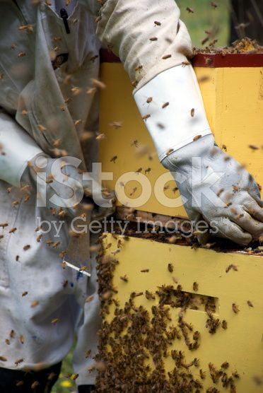Apiarist working with Beehives royalty-free stock photo