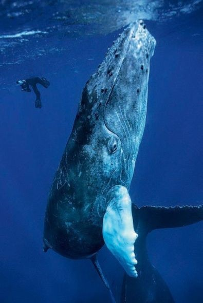 Blue Whale my-blue-heaven