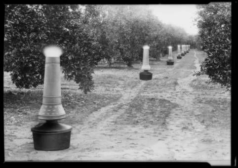 Eerie smudge pots glow in a Southern California citrus grove, 1928. USC, Dick Whittington Collection.  http://digitallibrary.usc.edu/cdm/ref/collection/p15799coll170/id/70061
