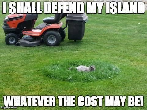 8f45b628866f808b656a5df6e20d4084 warrior cats funny hilarious animals 18 best grass memes images on pinterest funny pics, funny stuff,Lawn Memes