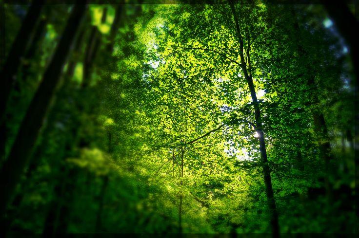 Muhteşem Doğa Görüntüleri ve Ormanın Ritmi