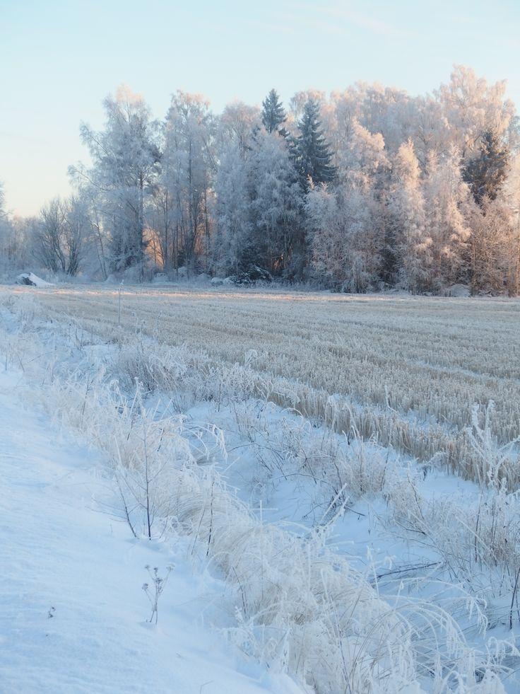 Talvi Runo