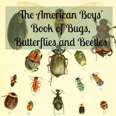 Don't let the title of this book fool you, it is for girls and boys of all ages who love to study bugs, beetles, and butterflies! #free #ebook