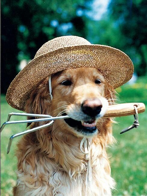 monty don's dog - Google Search Awesome! LOVE Nigel!! K