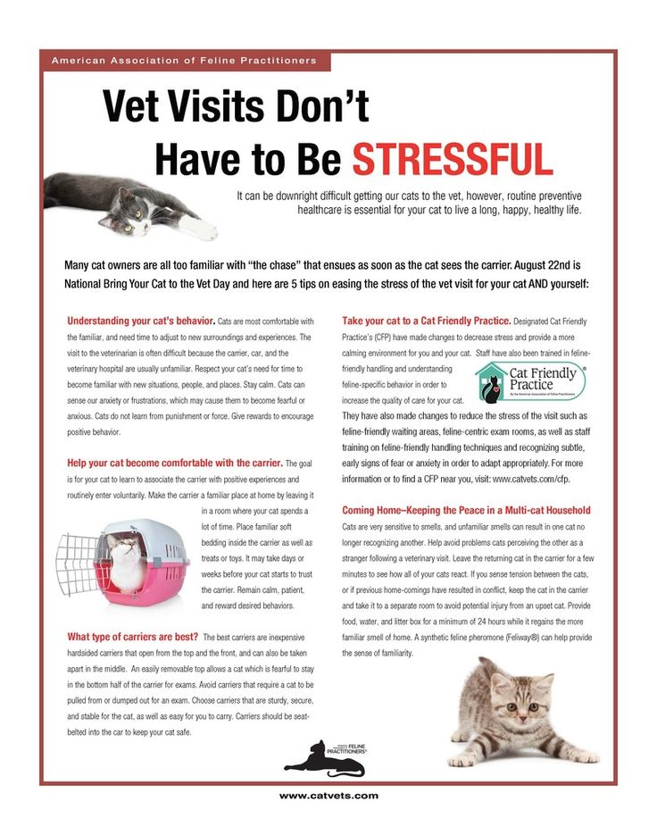 Cat Owner Brochures American Association of Feline
