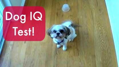 Doggie IQ Test: Vlogging Workshop, Iq Test, Mama S Losin, Doggie Iq