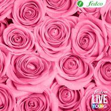 Una LIVE YOUNG nunca deja de ser romántica, El rosa representa el amor, romance, amistad y cariño.