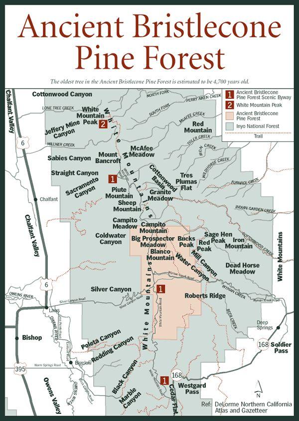Ancient Bristlecone Pine Forest near Bishop, California