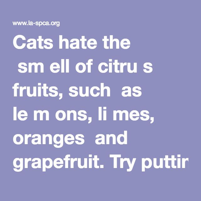 Cats hate the  sm ell of citru s  fruits, such  as le m ons, li mes, oranges  and grapefruit. Try putting orange and lem on peels out in  your ga rden. I n  addition to  making good  fertilizer,  they' l l repel cats. Or spray  the  area with  citrus-scented  spray s .   • Scatter coffe e  grounds or pipe tobacco in th e area. Ca ts dislike the s m ell. Do N O T use  cocoa bean shells, as these are poisonou s to dogs an d  cats.  • Spray  cat rep e llent (available at pet sup p l y  stores)…