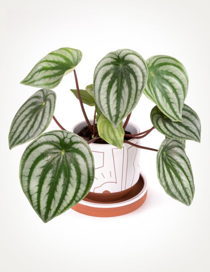 7 Houseplants With The Most Unique Leaves We Ve Ever Seen House Plants Indoor House Plants Plant Decor Indoor