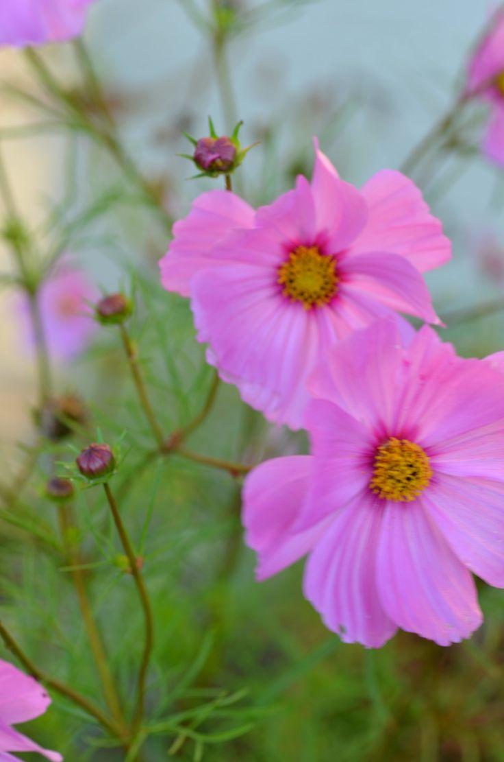 Wild Flowers, Grand Manan, New Brunswick, Canada by Morgan Guptill