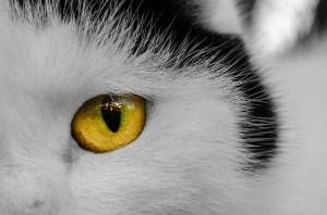 Common Eye Problems in Cats and Dogs