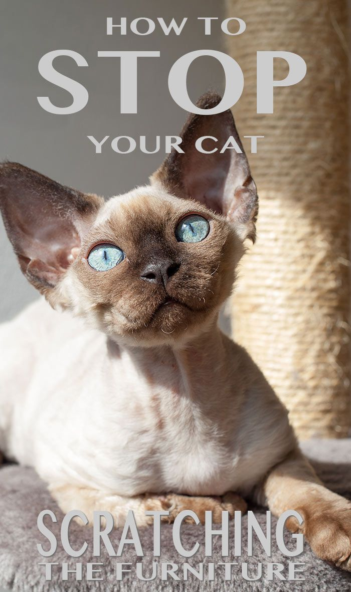1000 Ideas About Cat Site On Pinterest Cool Cats Cat Tail Language And Cats