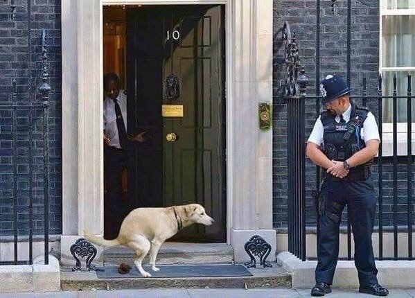 Poops On Uk Prime Minister S Door Number 10 Downing Street Now