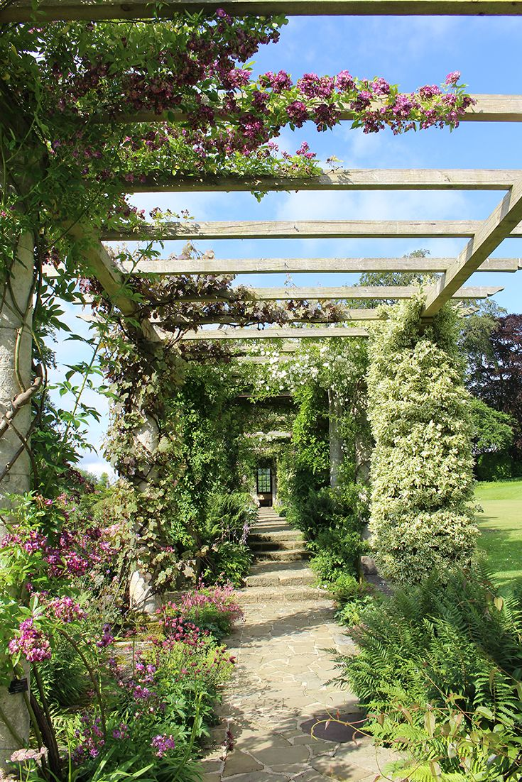 Beautiful roses on the Edwardian Pergola at West Dean Gardens in West Sussex in July.