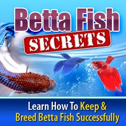 Caring For Betta Fish: Betta Fish Care - The Correct Way To Care for Bett...