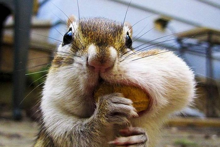 squirrels-with-nuts-01