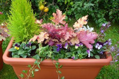 Les 79 meilleures images propos de jardin en pots sur for Jardiniere d hiver
