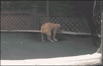 Funny Trampoline Dog Gif Picture