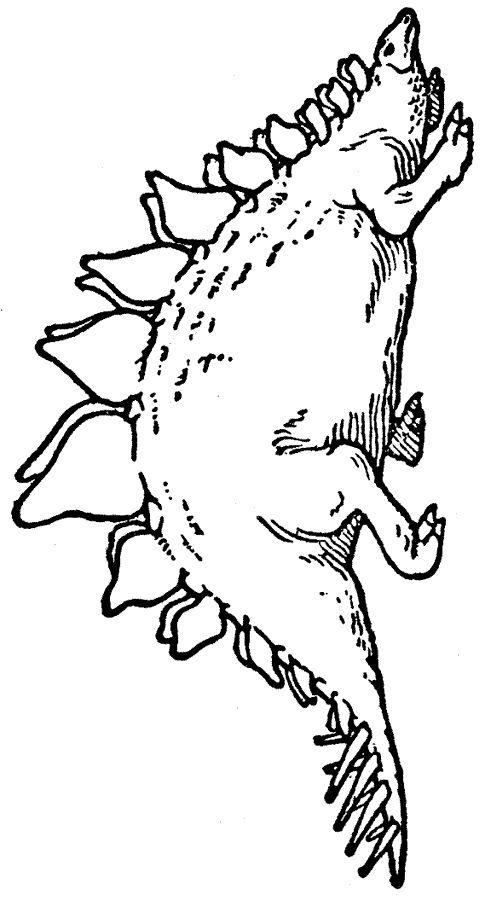t rex ausmalbild  ausmalbilder für kinder  malvorlage