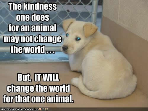 The kindness one does for an animal may not change the world. But it WILL change the world for that one animal.