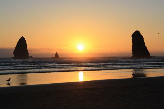 Cannon Beach Tourism: TripAdvisor has 29,086 reviews of Cannon Beach Hotels, Attractions, and Restaurants making it your best Cannon Beach resource.