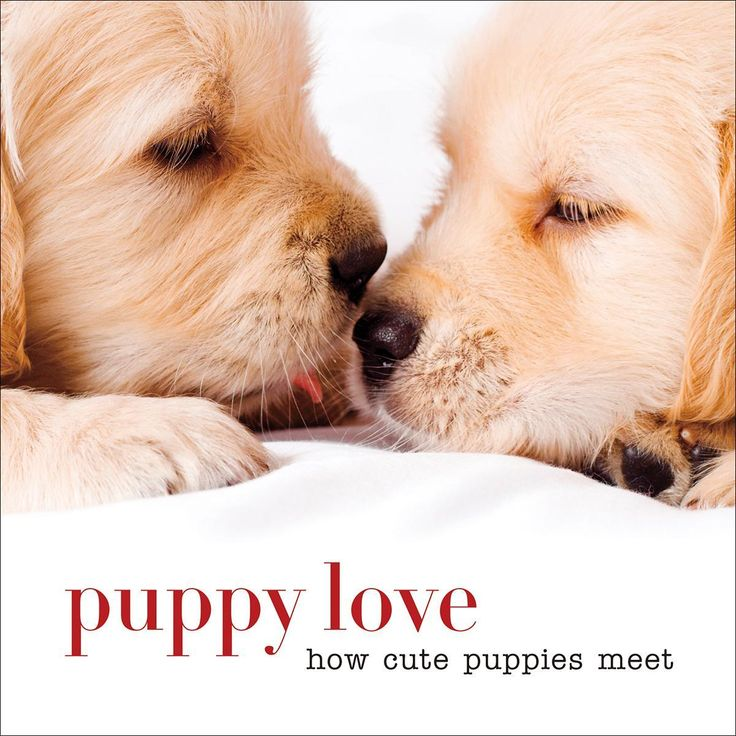 Sterling Publishing-Puppy Love How Cute Puppies Meet. It is love at first sight! Celebrate the cuteness of the affectionate puppies as they cuddle, snuggle and share a little kiss.