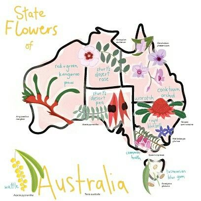 Australian State Floral Emblems Map Australiana Illustration    By Eleanor McNeill