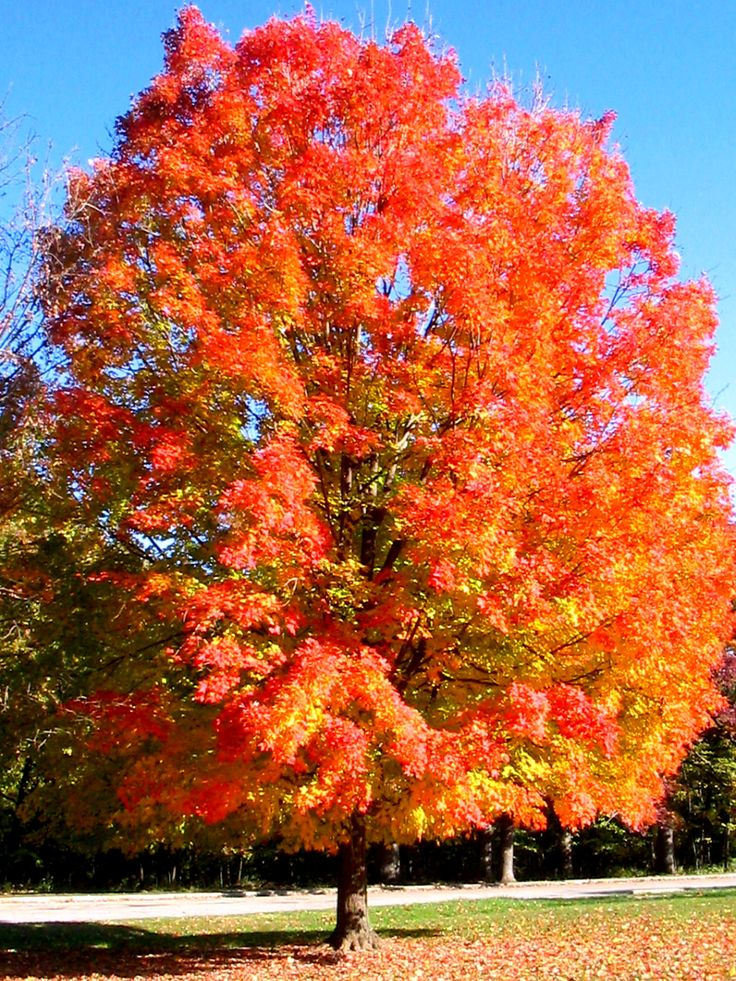 76 best new england season s images on pinterest autumn for What saltwater fish are in season now