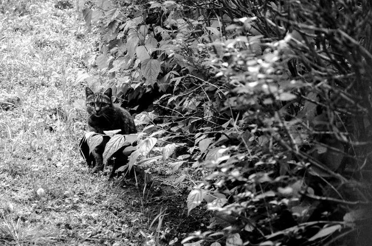 Listen #cat #black #white #photography