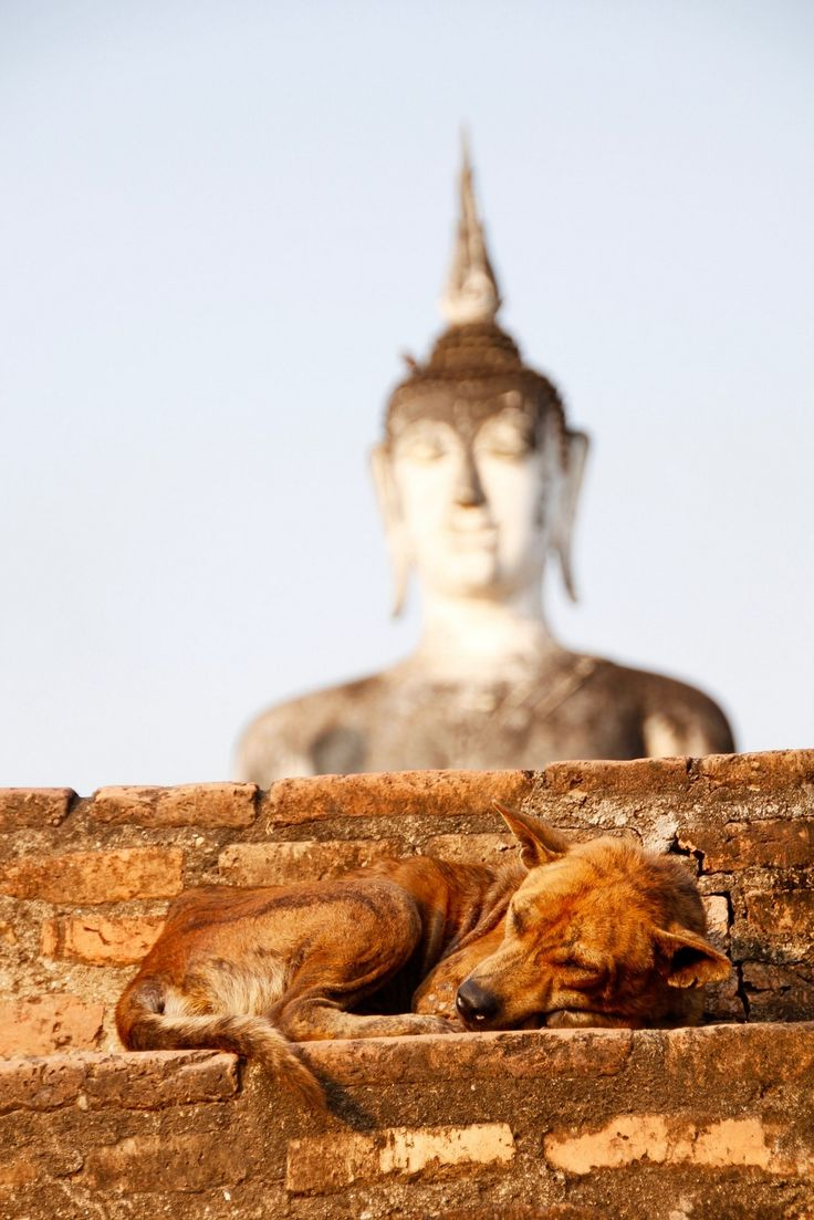 Traveling with your dog overseas especially in Asian countries is an adventure of a lifetime. These are tips for taking your dog with you to Thailand.