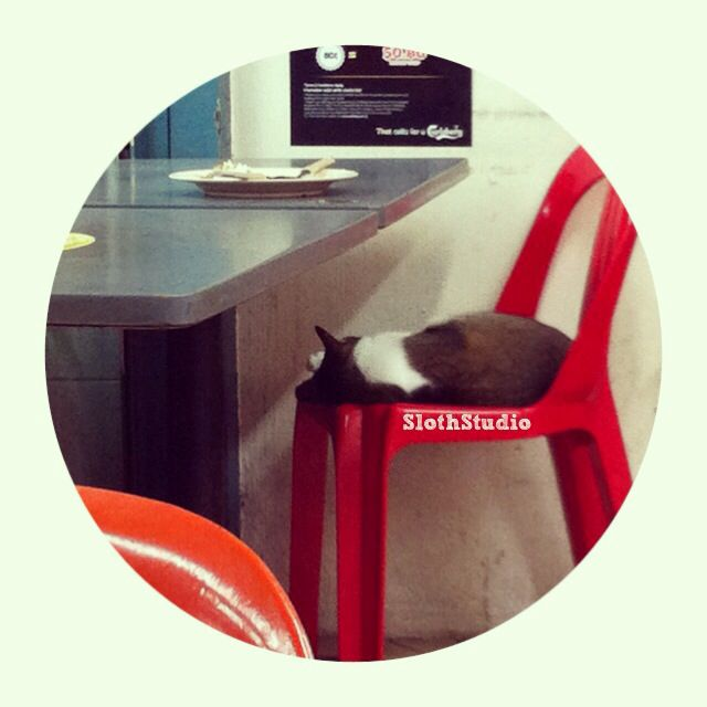 ":""Having breakfast, lunch and dinner at the same coffee shop due to mural job, always see this fat cat sleeping and no one disturbing her...""  www.facebook.com/SlothStudio"