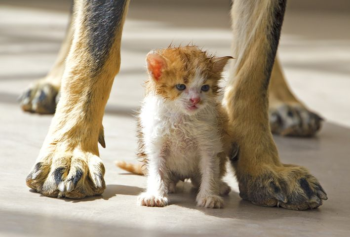 Katze, Hund, Haustier, Zusammen