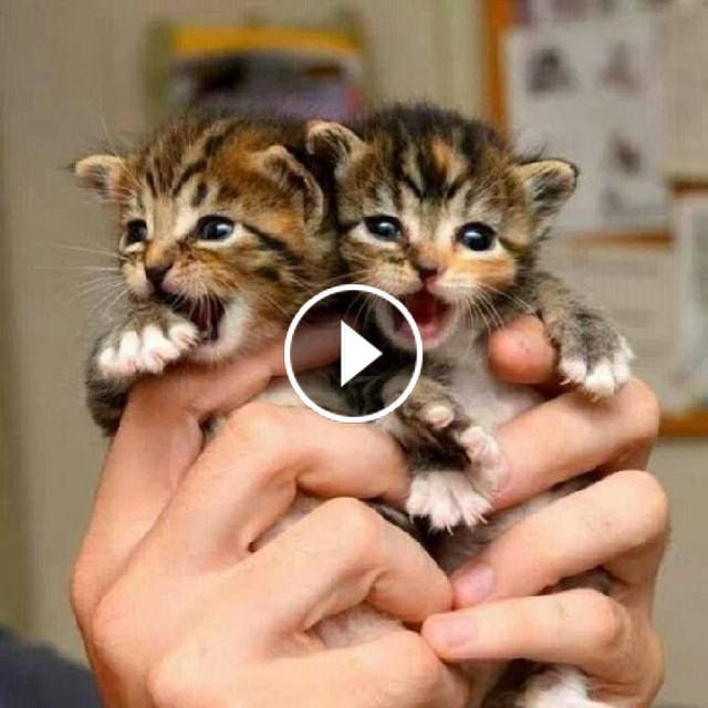 Video So Many Cute Kittens Videos Compilation 2019 Ymw0xo4lkh